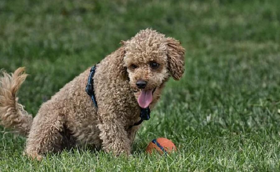 Shock per un'intera famiglia, tutti positivi al Coronavirus… anche il cane. La storia che arriva da Bari