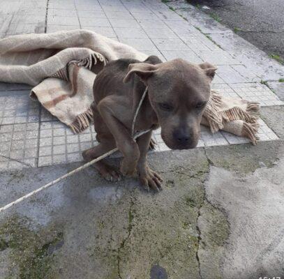 Maltrattamento animale a Messina, cane legato a un palo denutrito e disidratato: fotografato l'autore