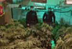 Spaccio a Palermo: scoperta piantagione di marijuana, 75 piantine indoor e 2.590 euro in casa