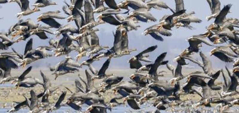 """Dal Coronavirus all'Influenza Aviaria, l'EFSA lancia l'allarme: """"Focolai in diverse zone d'Europa"""""""