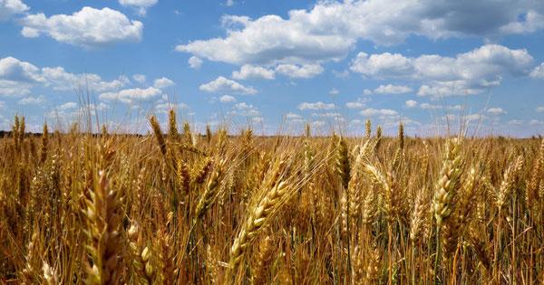 Piano di sviluppo rurale, in arrivo altri 660 milioni di euro per l'agricoltura in Sicilia