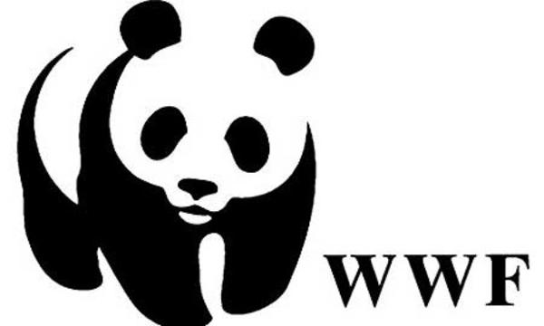 """Rondoni stremati e uccisi dal caldo estivo, l'allarme del WWF: """"Sono centinaia"""""""