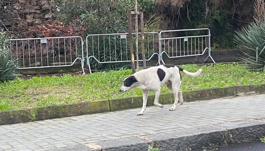 """Aumentano i cani randagi nel quartiere Borgo-Sanzio a Catania, Angela Cerri: """"Chiediamo provvedimenti seri"""". FOTO"""