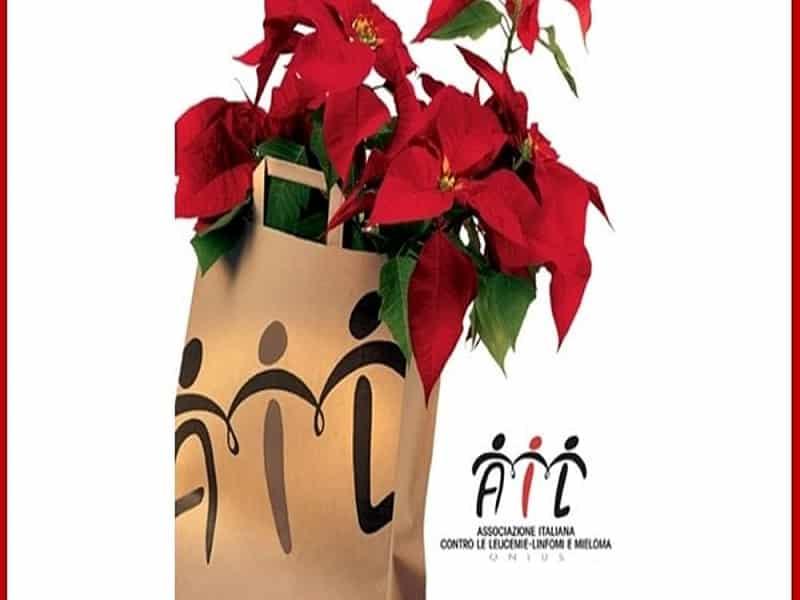 Stella Di Natale Ail 2021.Stelle Di Natale L Ail Torna In Piazza Banchetti Dal 5 All 8 Dicembre Nelle Piazze Di Siracusa E Provincia