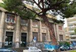 Catania, pino pericolante in piazza Roma: situazione risolta grazie all'intervento di tutti gli attori coinvolti