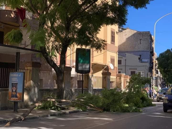 Maltempo, Sicilia investita da venti forti e neve: alberi caduti e rami spezzati nel Palermitano – FOTO
