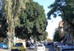 """Catania, interventi potatura alberi in piazza 2 Giugno 1946. Buceti: """"Restituire il giusto decoro"""""""