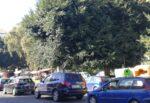 """Catania spoglia di verde, la denuncia di Città Insieme: """"Piantiamo gli alberi da una parte, dall'altra li tagliamo"""""""
