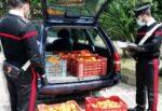 Catania, Alt dei carabinieri: in macchina 150 chili di arance, ma non dicono da dove provengono