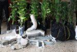 Ragusa, serra di marijuana all'interno della propria casa: ai domiciliari padre e figlio