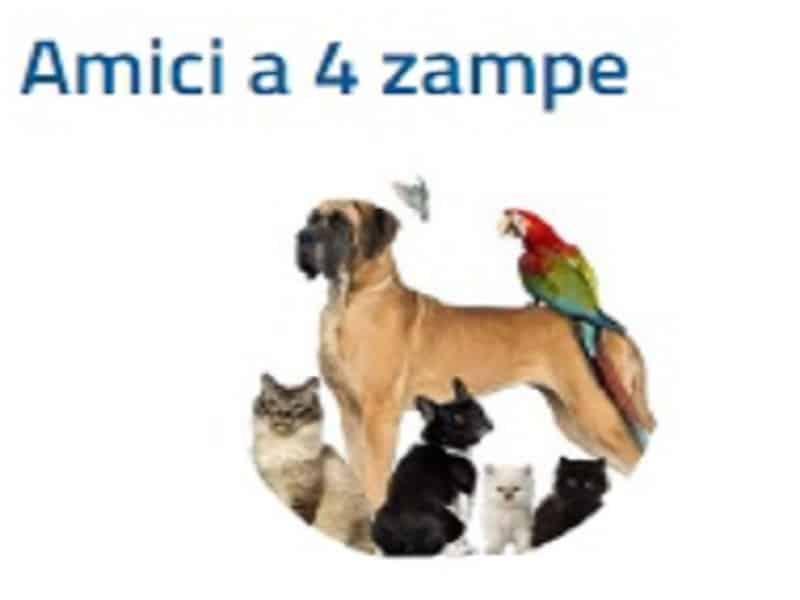 """Catania, attivismo contro abbandono e maltrattamento animali: nasce la sezione """"Tutela e benessere degli animali"""""""