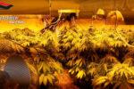 Servizio antidroga a Bolognetta: 4 arresti per coltivazione di droga e furto di energia elettrica