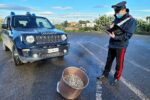 Sequestro di oltre 30 chili di telline in cattivo stato di conservazione: catanese denunciato