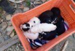 Orrore in Sicilia, cuccioli di cane gettati dentro un pozzo profondo: salvati da volontari e vigili del fuoco, uno morto