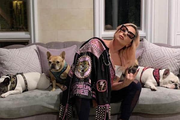 Sparano al dog sitter di Lady Gaga per rapire i cani della cantante: è ricoverato in gravi condizioni