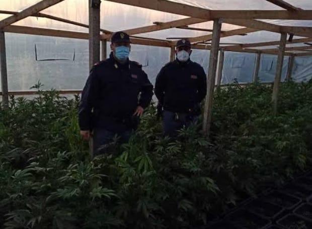 """""""C'è crisi, meglio la marijuana!"""", pregiudicato di Comiso fermato mentre coltiva droga in serra"""