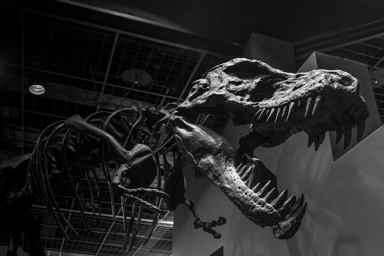 Il Tirannosauro ha conquistato anche la Sicilia? L'Isola al tempo dei dinosauri