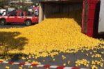 """Camion carico di limoni si ribalta: autista ferito. """"Inferno"""" di sirene: ambulanza, vigili del fuoco e carabinieri sul posto"""