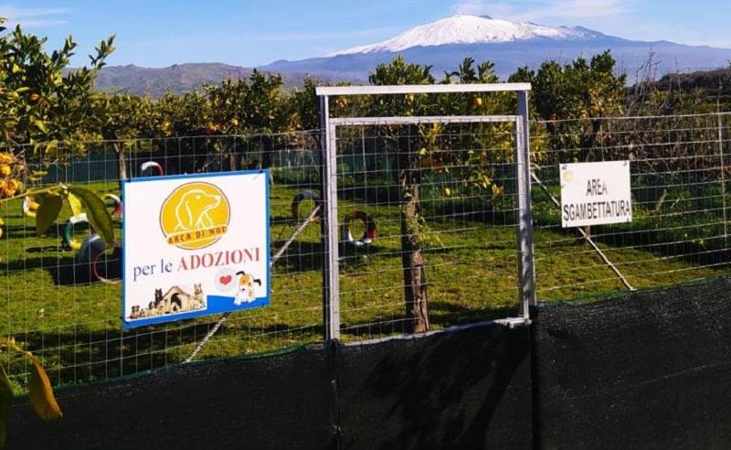Animali domestici e Coronavirus, a Catania cani e gatti dei ricoverati assistiti gratuitamente: ecco come richiedere assistenza