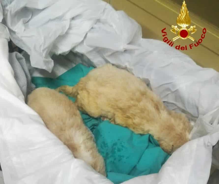 Cuccioli abbandonati nel Catanese, trovati 4 cagnolini in un sacco: solo due ce l'hanno fatta – FOTO