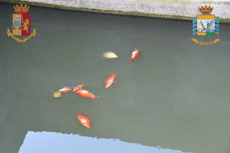 Inquinamento in Sicilia, acque reflue sversate nel fiume: sequestrato impianto di depurazione – FOTO