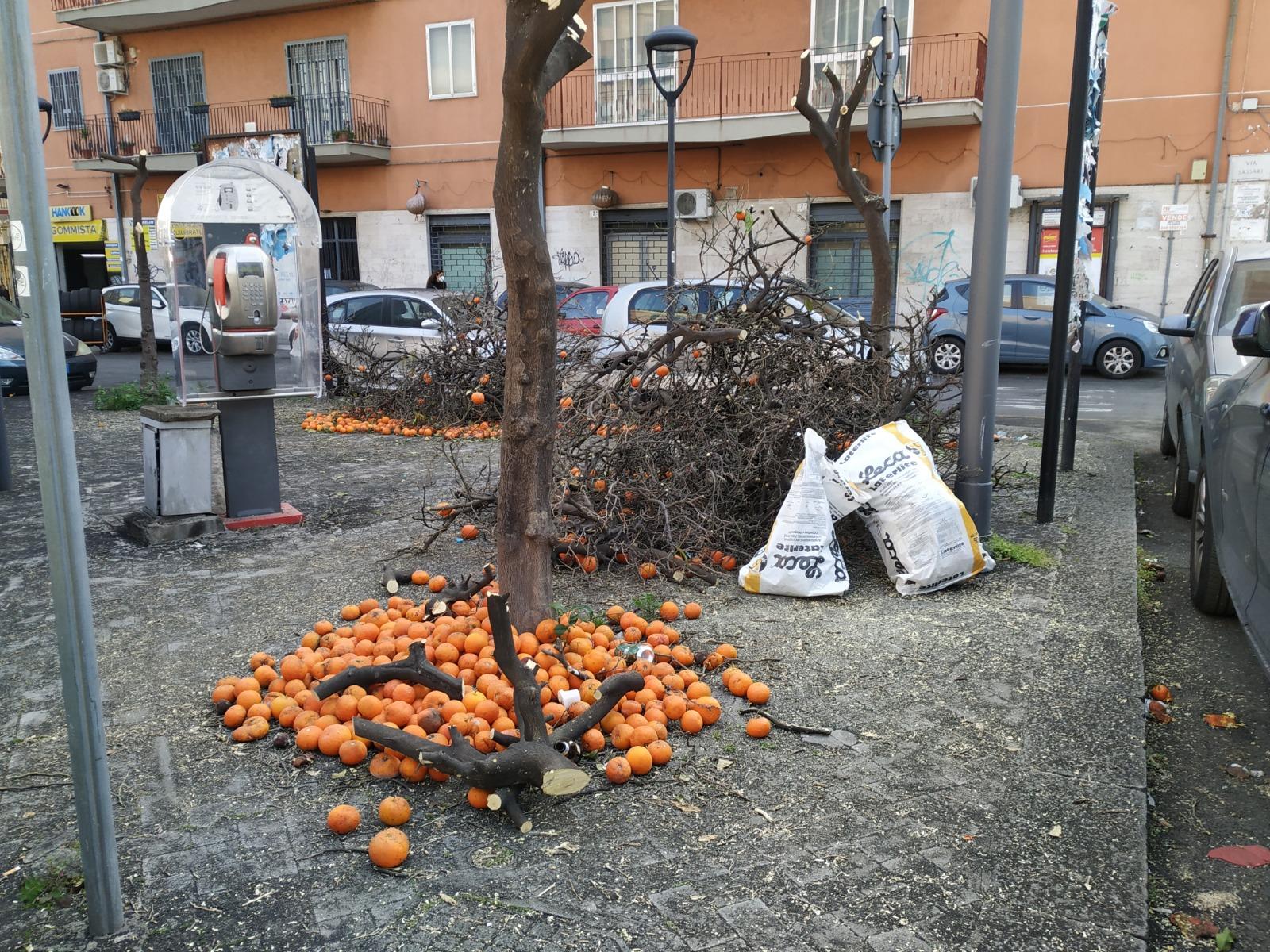 """Capitozzatura degli alberi a Catania, Comitato Vulcania: """"Arbusti diventati figure informi"""""""