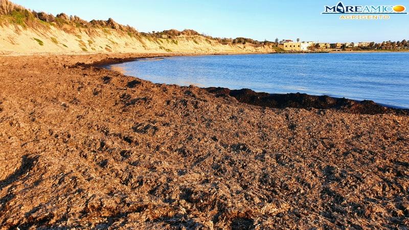 """Posidonia oceanica sui bagnasciuga siciliani, Mareamico: """"Non sprechiamo questa risorsa fondamentale"""""""