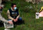"""Cardellini sequestrati dalla polizia, guardie ambientali del WWF li liberano nell'area protetta """"Torrente Vaccarizzo"""""""