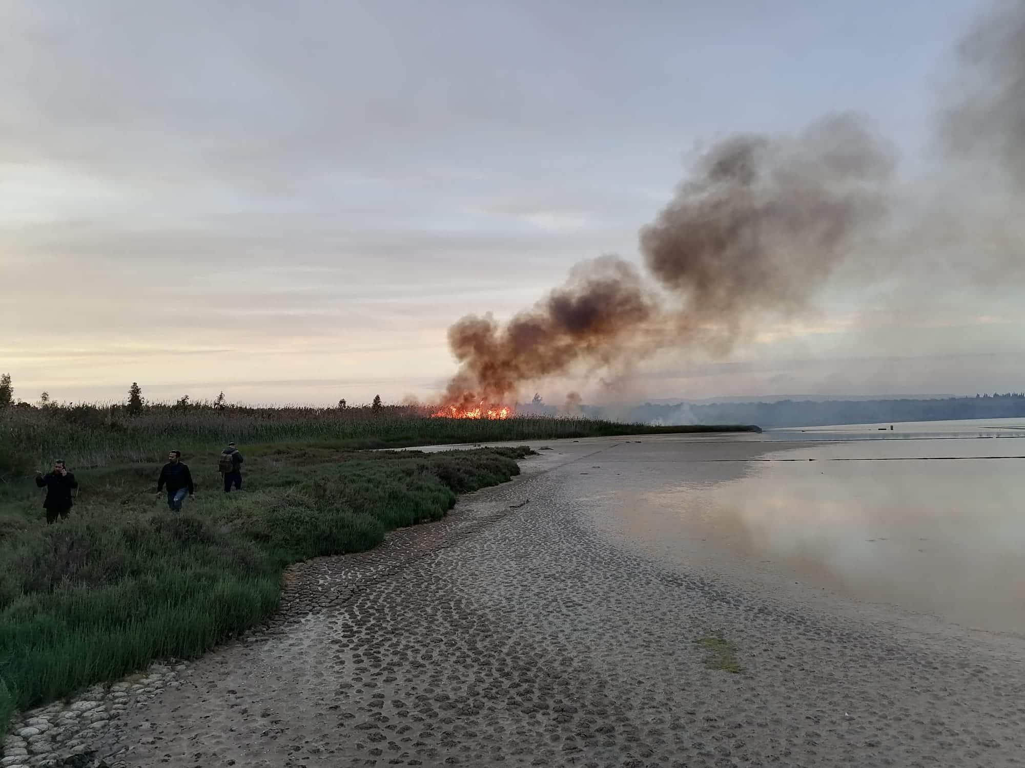 Incendio distrugge parte della Riserva di Vendicari: la matrice sarebbe dolosa