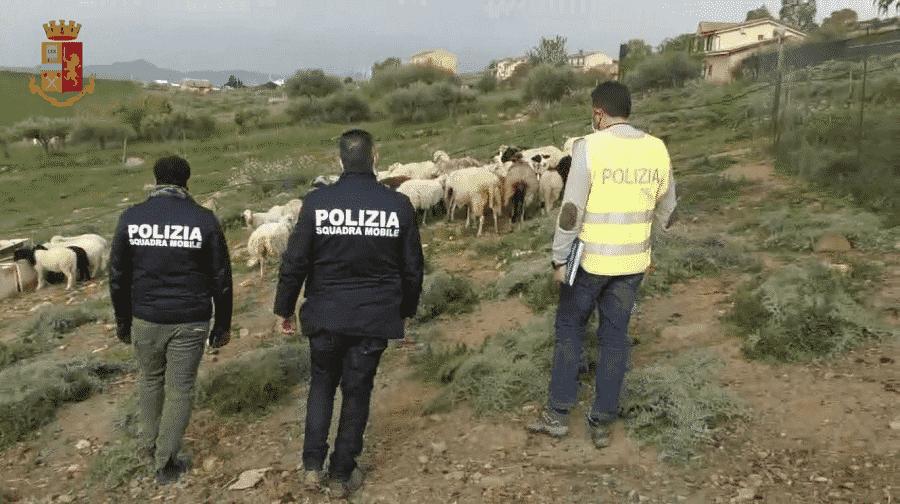 Allevamento illegale nelle campagne siciliane, trovati 36 animali non censiti: sequestrati e visitati dai veterinari – VIDEO