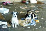Choc in Sicilia, cuccioli morti nel box e cani vivi terrorizzati nel degrado – FOTO e VIDEO