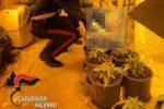 """Due serre di droga """"mantenute"""" con l'energia elettrica rubata: scattano gli arresti"""