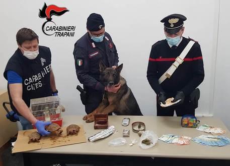 Illegalità in famiglia, droga e detenzione illegale di specie protette: arrestati marito e moglie, denunciato figlio