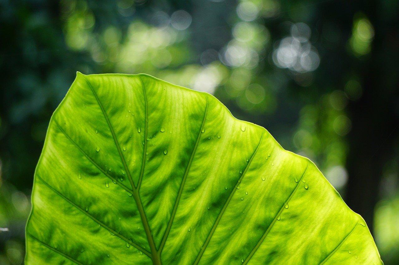 """Giornata mondiale dell'ambiente: 10 anni per """"far pace con la natura"""""""