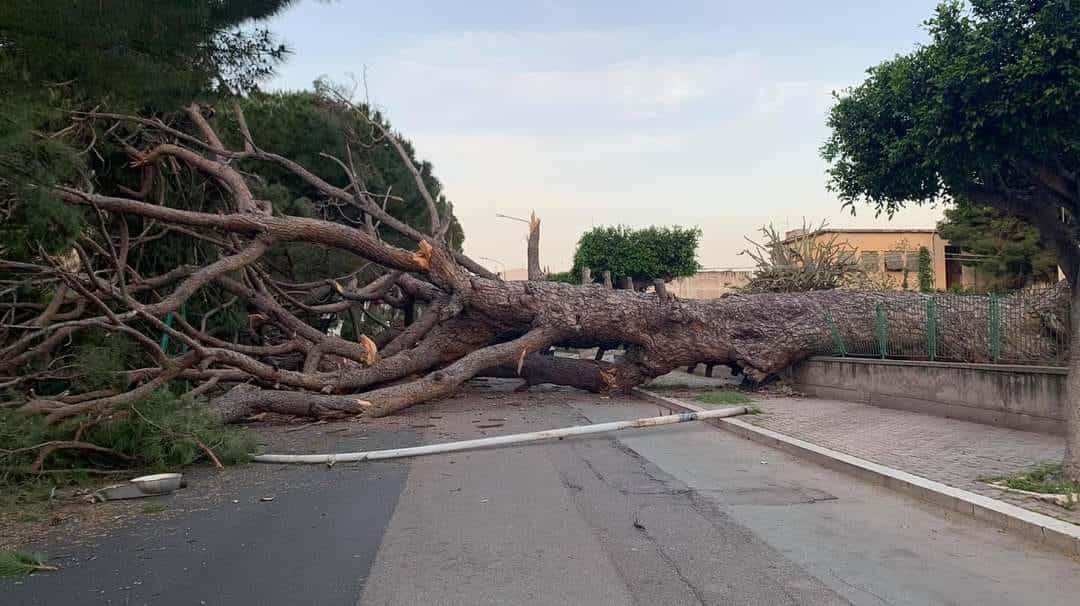 Tragedia sfiorata in viale Regione Siciliana, crolla pino secolare: vigili del fuoco sul posto