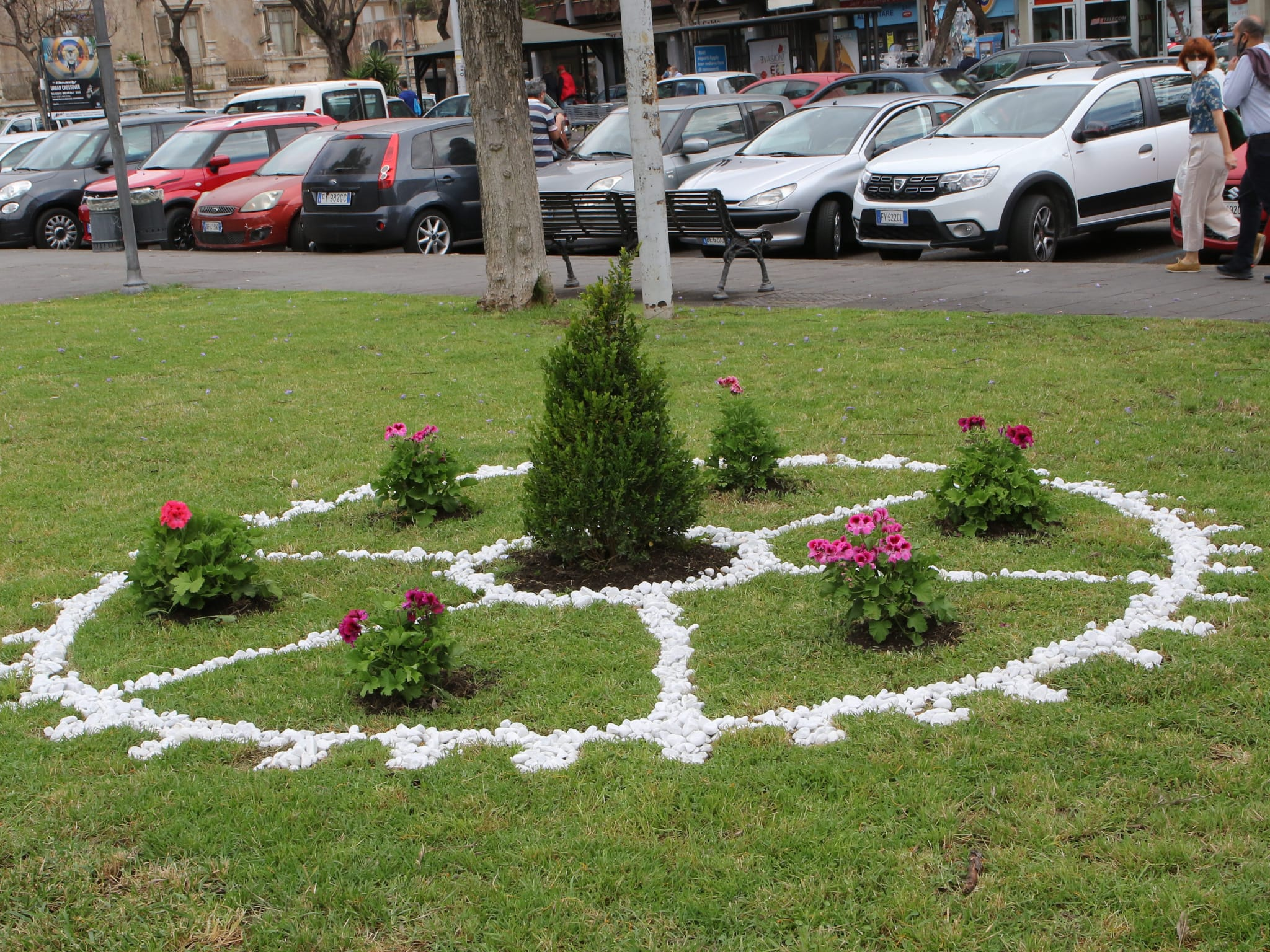 Catania, posa nuove piante e cura del verde: restyling in piazza Cavour, soddisfatto il Presidente Ferrara