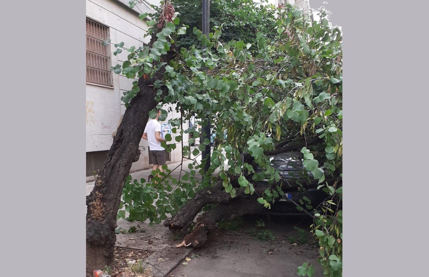 """Cade un albero e distrugge un'auto, Igor Gelarda: """"Speriamo che non si faccia male qualcuno"""" – FOTO"""