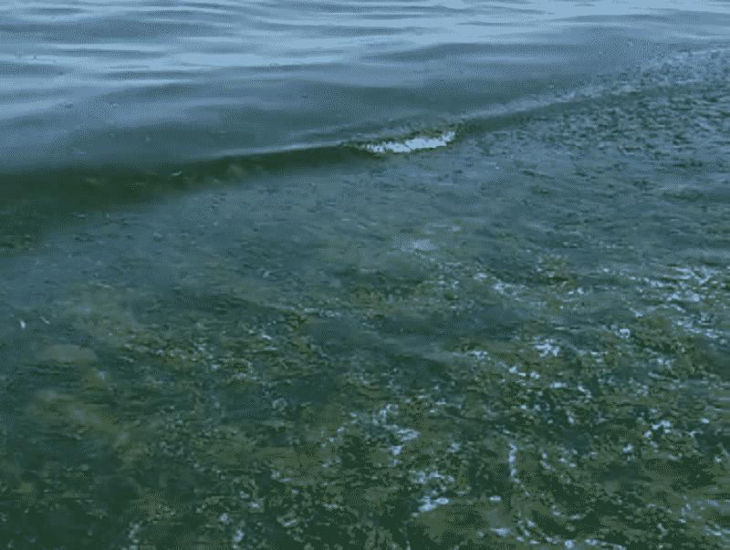 """Playa di Catania, acqua putrida tra alghe e rifiuti. """"Vi consiglio di non venire"""": l'ennesima batosta al turismo locale"""
