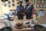 """""""Rubavano"""" la luce pubblica per alimentare serra indoor: moglie denunciata, padre e figlio arrestati"""
