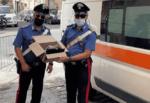 Catania, carabinieri in pattuglia per il G20 trovano un gattino abbandonato in fin di vita: salvato e portato al sicuro