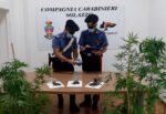 Milazzo, coltivava ed essiccava la droga in casa: scattano gli arresti per 47enne