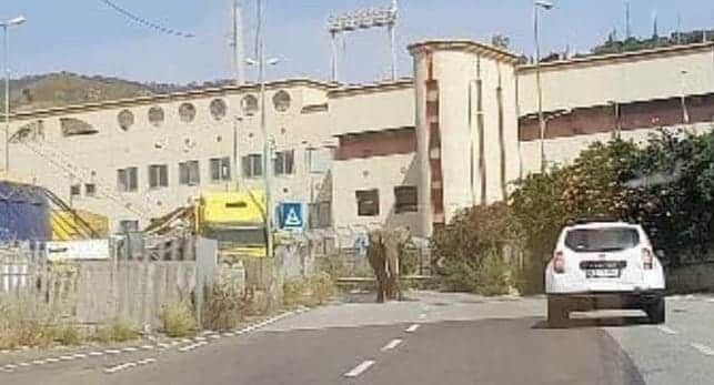 """L'elefante fuggito dal circo e l'ironia dei siciliani: """"Sta andando a Catania, dal liotru!"""""""