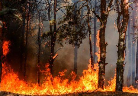 Sicilia in fiamme, decine di incendi nel Palermitano: cenere sui balconi, situazione critica a Portella della Ginestra