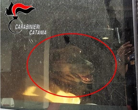 Dramma a Catania, cane chiuso in auto sotto il sole cocente: denunciato il proprietario