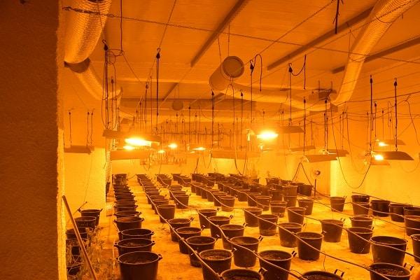 Serra per coltivare marijuana con allacci abusivi alla luce: 22enne denunciato