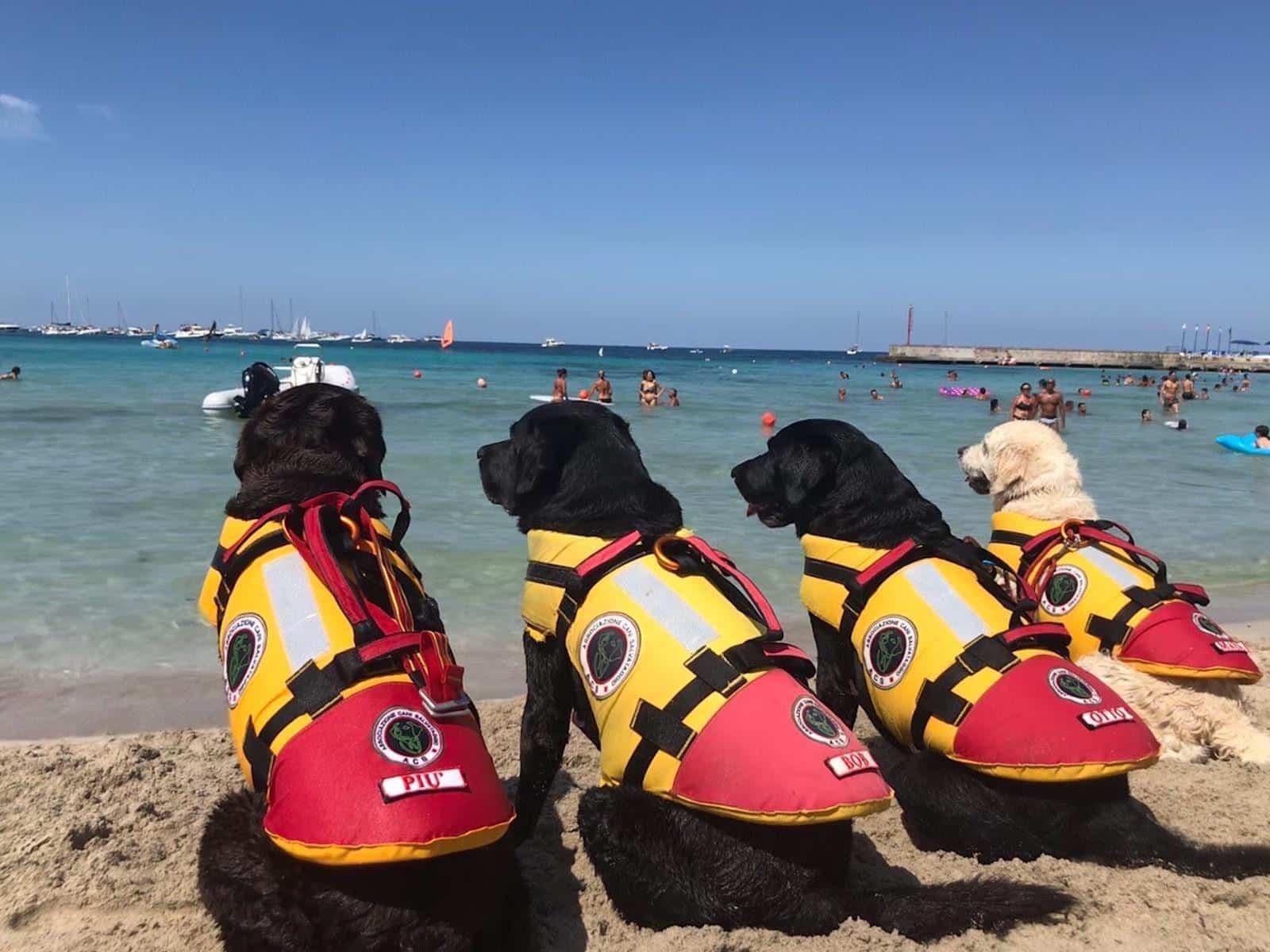 Spiagge libere a Catania, cani addestrati in azione alla Playa per operazioni di salvataggio in mare