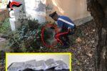 Marijuana nascosta in un parco del Catanese: scoperto deposito di 5 chilogrammi di droga