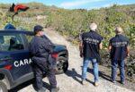Bronte, 4 aziende di pistacchio multate per irregolarità amministrative