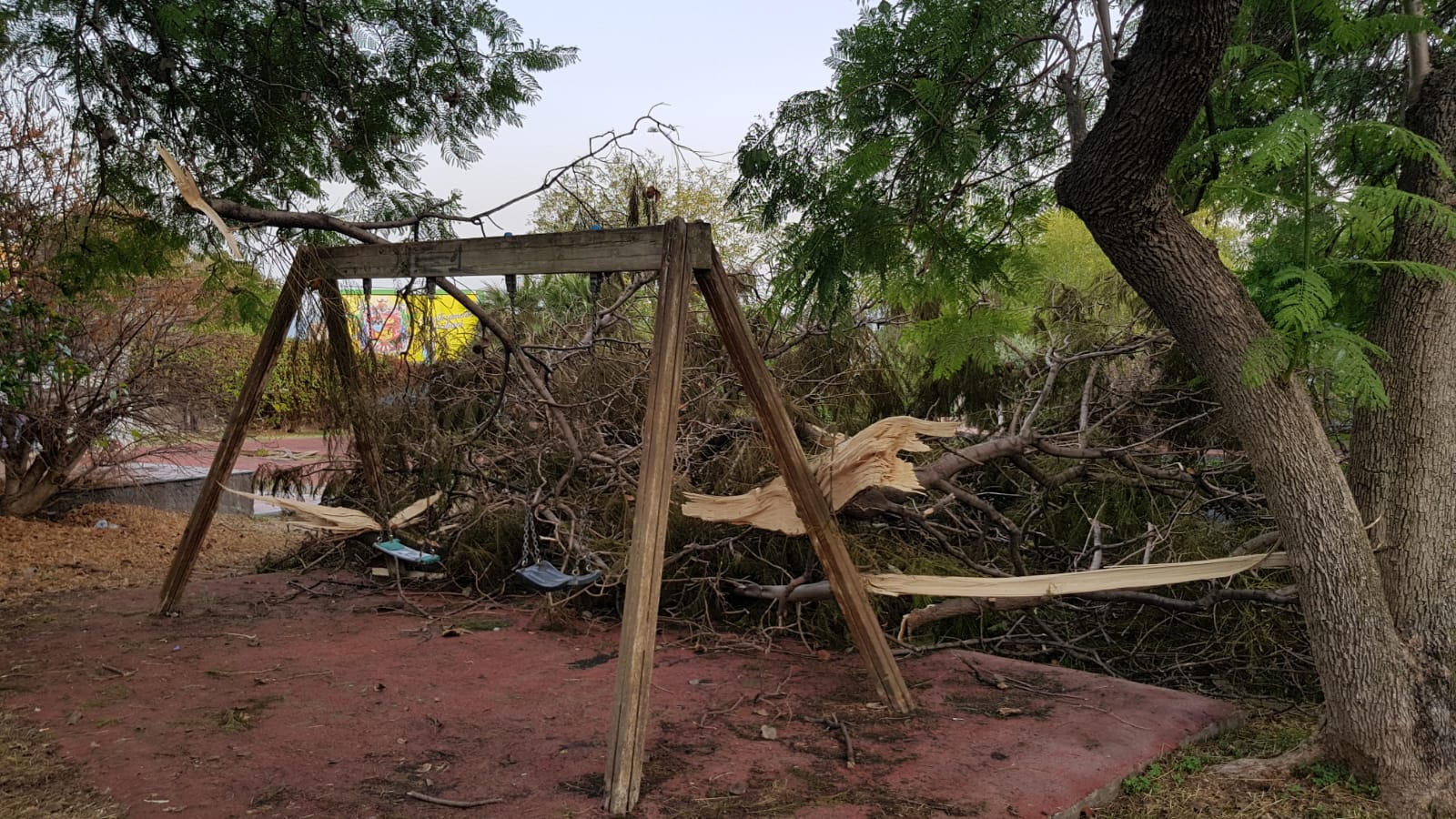 """Pericolo al parco Gandhi, grosso ramo spezzato accanto all'altalena. Zingale: """"Serve intervento urgente"""""""
