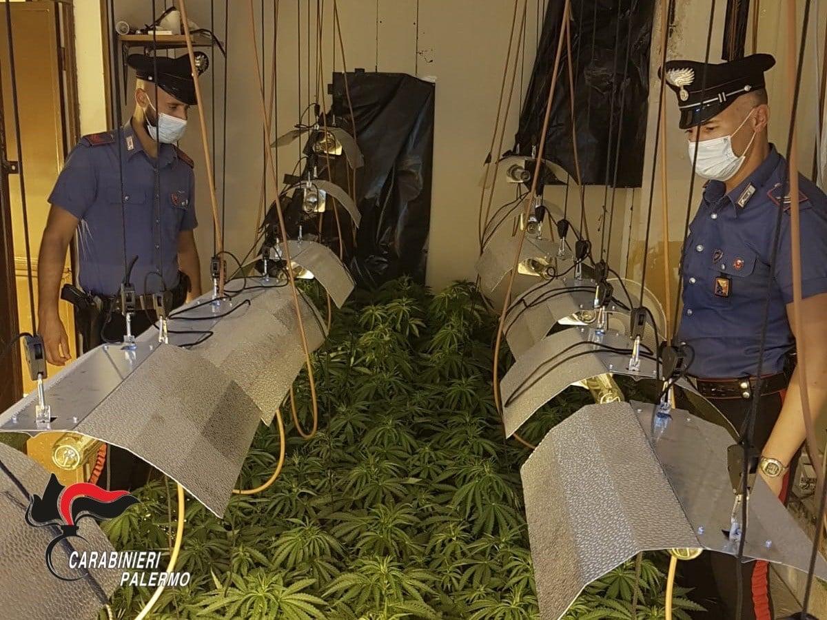 Serra indoor da 260 esemplari di cannabis scoperta, arrestato 25enne